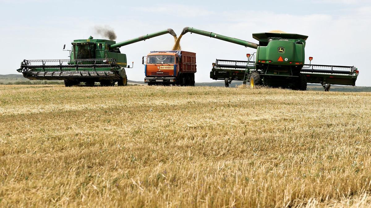 campo-granos-cosecha-economia-trigo-1920